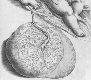 De formato foetu liber singularis (1626)